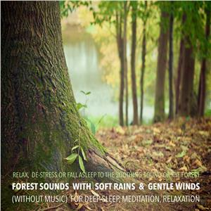 Forest Sounds with Soft Rains & Gentle Winds (without music